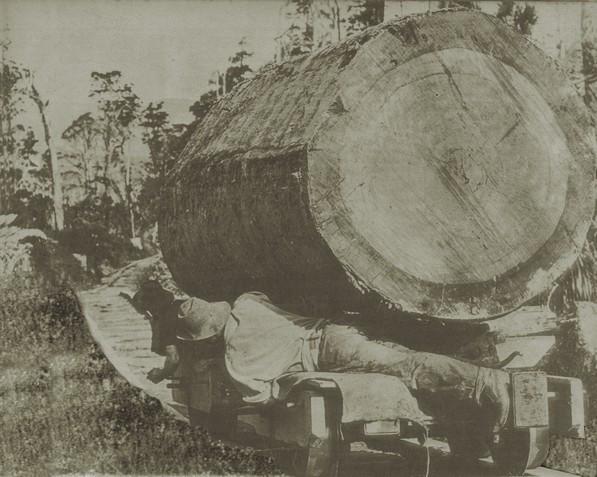 Piha_logging_1900